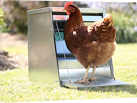 Chooktred Chicken Treadle Feeder